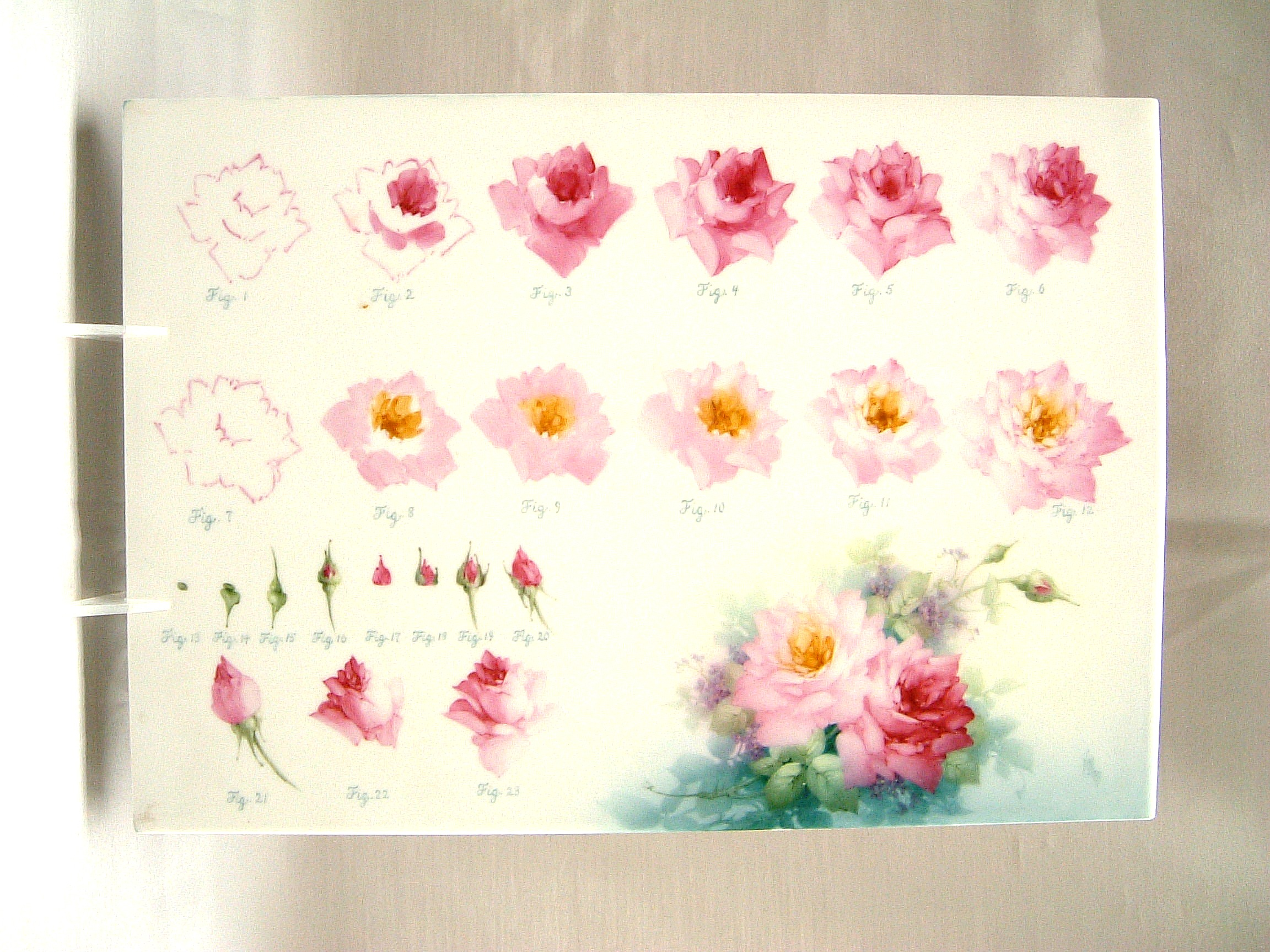 Paula collins studies for How to paint a rose in watercolor step by step
